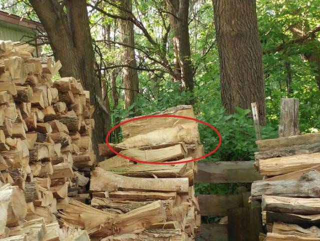 Can You Spot The Cat In The Picture?