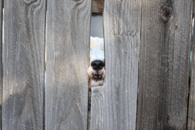Dogs Sticking Their Head Through Fences Is A Funny View
