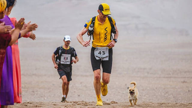 Stray Dog Joins The Race And Finds A Loving Owner In The End