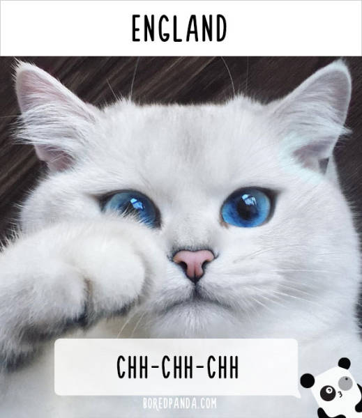 What Is The Sound People Use To Call Cats In Different Countries