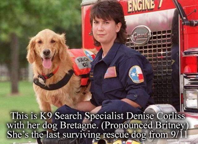 Bretagne: The Last 9/11 Rescue Dog