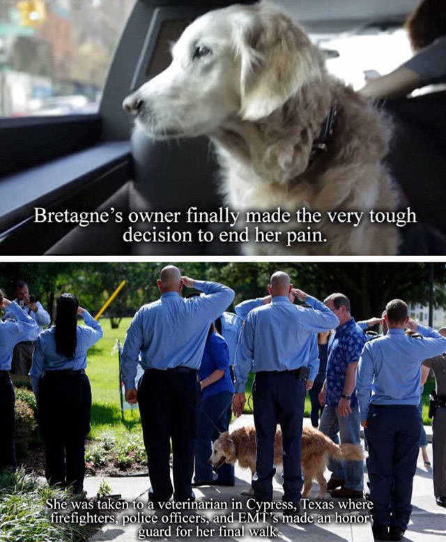 Bretagne: The Last 9/11 Rescue Dog