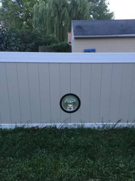 Special Windows For Dogs In A Fence