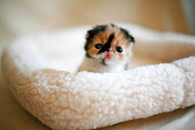 These Kittens Are So Cute You'll Wanna Squeeze Them To Death