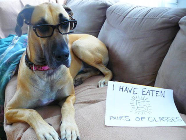 Funny And Clever Dog Pet Shaming