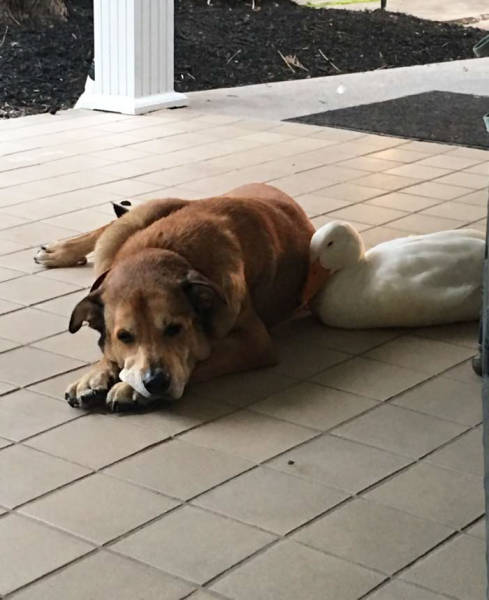 This Dog Was Very Depressed After He Lost His Friend, But Then…