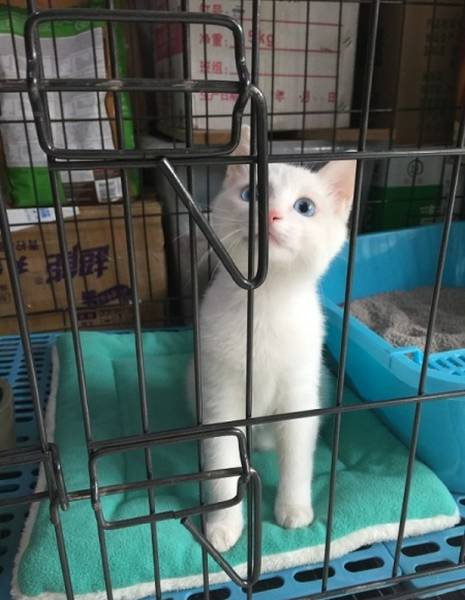 This Kitty Made A Sneaky 'Prison Break'