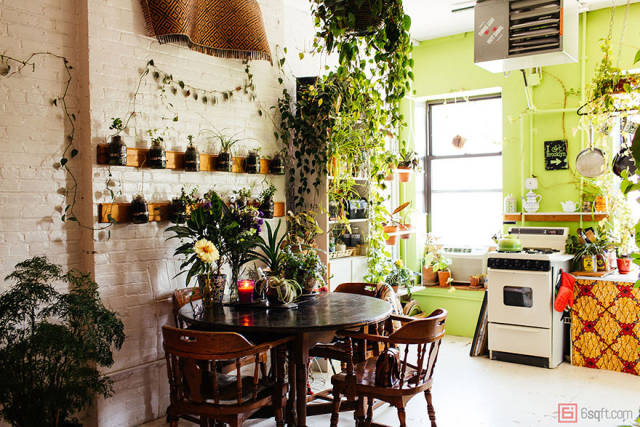 Girl Grows More Than 500 Plant In Her Apartment