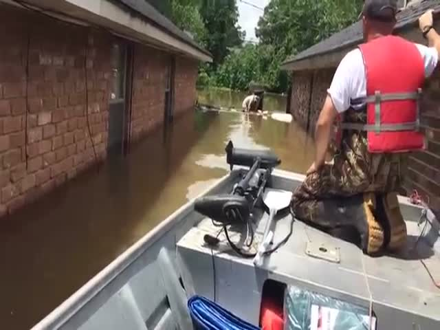 Exhausted Pooch Is Saved From Flood