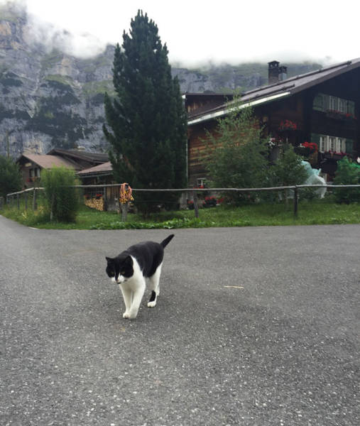 Cat Guides Lost Hikers Back To Civilization In The Swiss Mountains