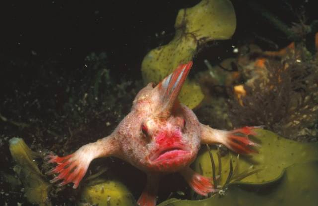 Monstrous Creatures That Lurk In The Depths Of The Ocean