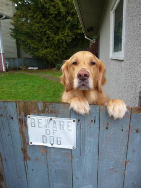 Beware Of Dogs On Guard Duty