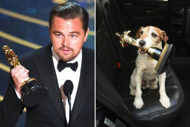 Celebrities And The Dogs That Look Exactly Like Them