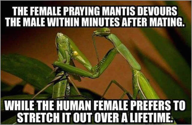 Amusing Memes to Make You Laugh out Loud