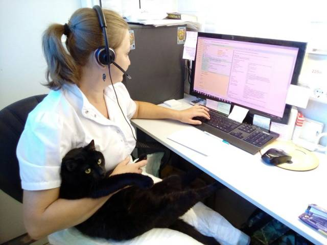 Rescue Cat Works As A Nurse And Helps Heal Other Animals