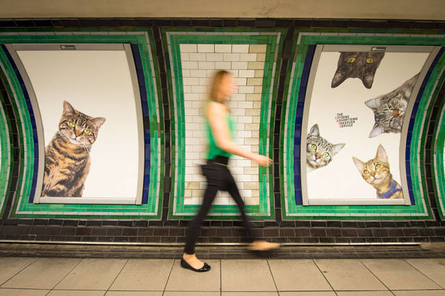Cats Are Everywhere In The London Subway