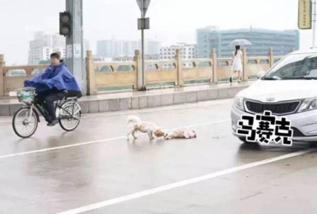 Poignant Photos Of A Dog Who Stands Guard Over His Friend Hit By A Car