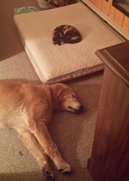 Cats Steal Dogs' Beds And Don't Give A F#uck