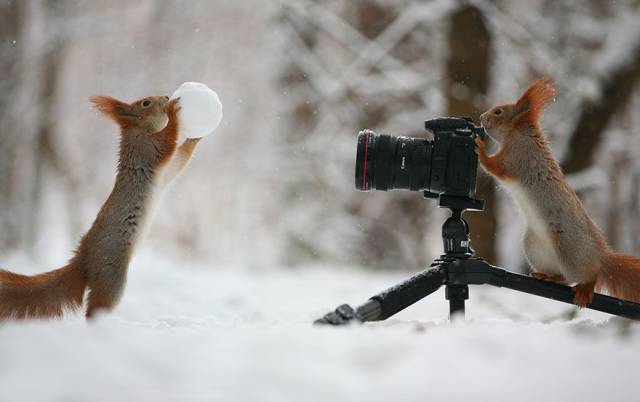 One Of The Cutest Photo Shoots With Squirrels