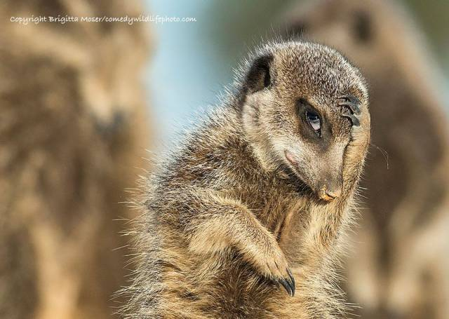 Here Are The Best Entries Of The Comedy Wildlife Photography Awards 2016