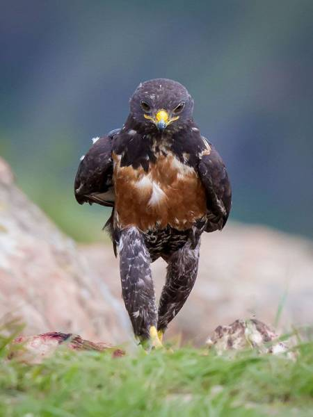 The Photo Of This Random Hawk Looking All Badass Triggered A Major Photoshop Battle
