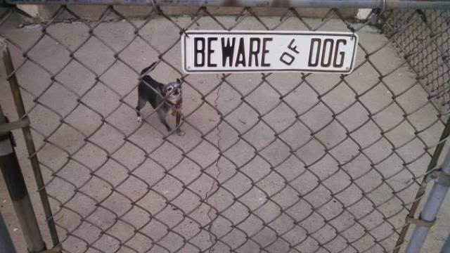 You Should Definitely Beware Of These Fierce Guard Dogs