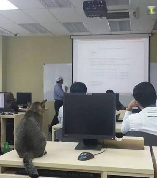 Cat Goes To The University And Do What Many Students Do During Classes