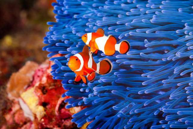 Impressive Facts About Different Animals That May Surprise You