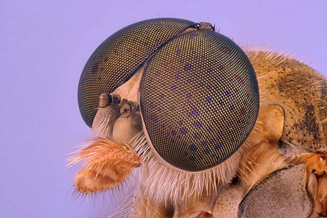 Amazing Images Under The Microscope That Reveal Invisible To The Naked Eye Universe