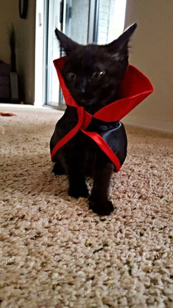 Some Of The Best Halloween Costumes For Cats