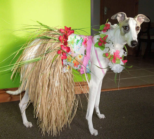 Cool Dog Costume Ideas For Halloween
