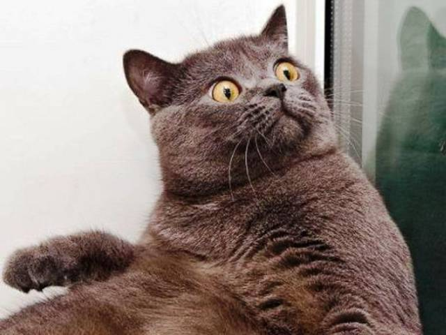 These Cats Facial Expressions And Behavior Totally Reflect Ours When We're At Work