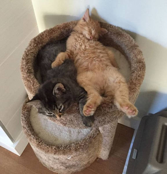 Adorable Cats Are Inseparable And Sleep Together On A Outgrown Bed