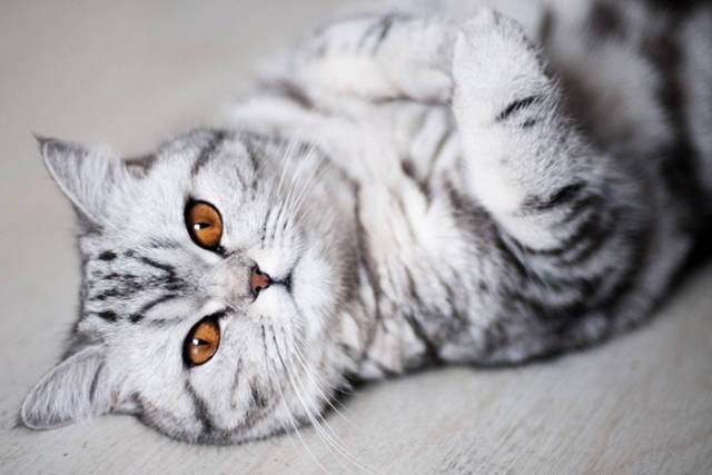 These Are Some Of The Most Gorgeous Cats On Earth