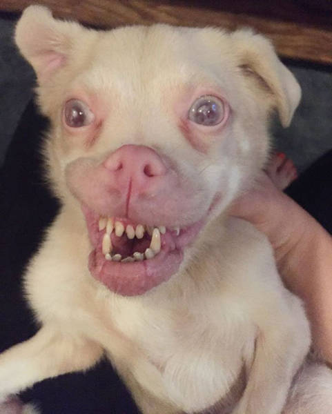 Ugly Bat-Dog Is Actually A True Cuteness Overload