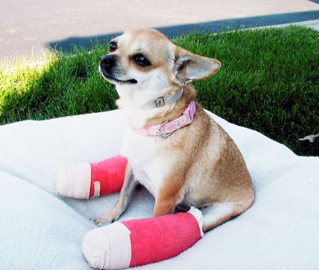 Tiny Cute Animal Having Tiny Casts Look Even More Adorable