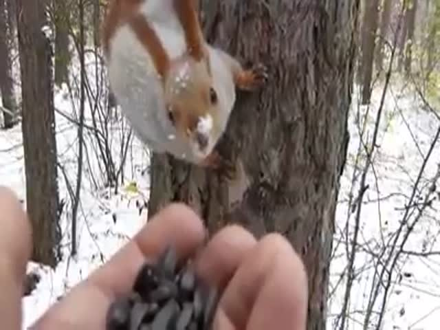Sunflower Seeds Are Like A Magnet For Animals