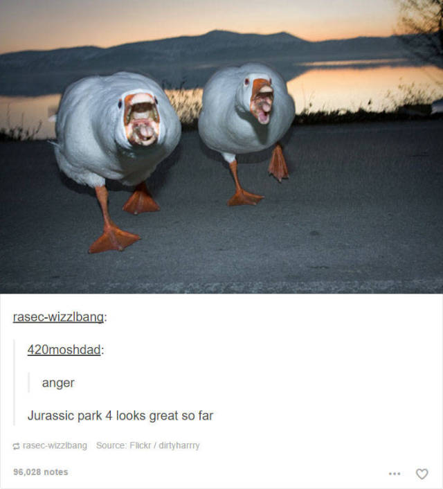 these funny animal posts in tumblr will make you giggle