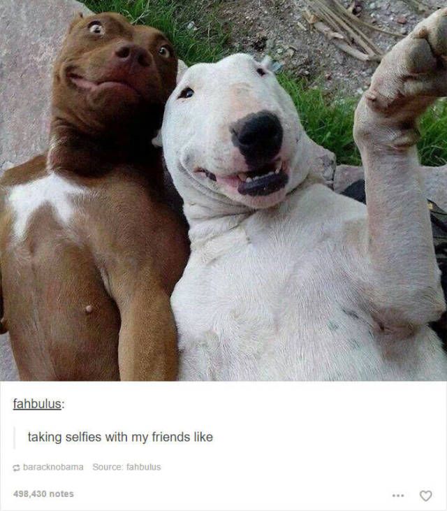 These Funny Animal Posts In Tumblr Will Make You Giggle Pics - 45 tumblr posts about animals that are impossible not to laugh at