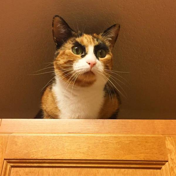 This Kitty Has Mad Eyebrows That Give It A Funny Judgmental Look