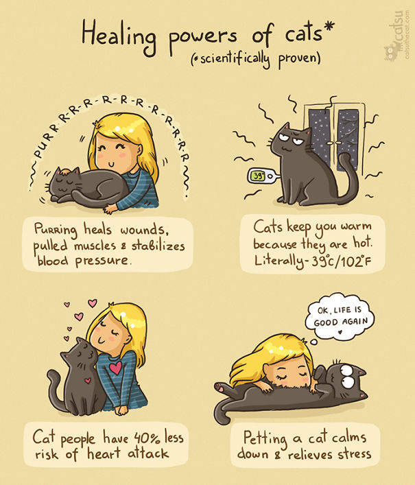 Amusing Comics About What It's Like Living With A Cat