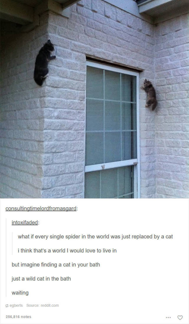 Hilarious Cat Posts On Tumblr Will Make Your Friday Even Better