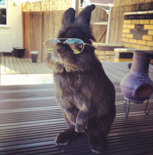 This Rabbit In Sunglasses Makes For A Perfect Photoshop Battle