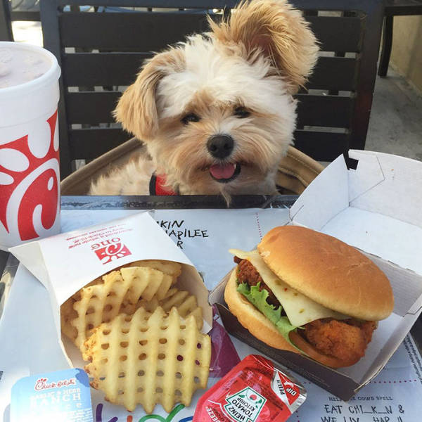 A Starving Stray Pooch Gets Rescued And Taken To Almost Every Pet-Friendly Restaurant In LA