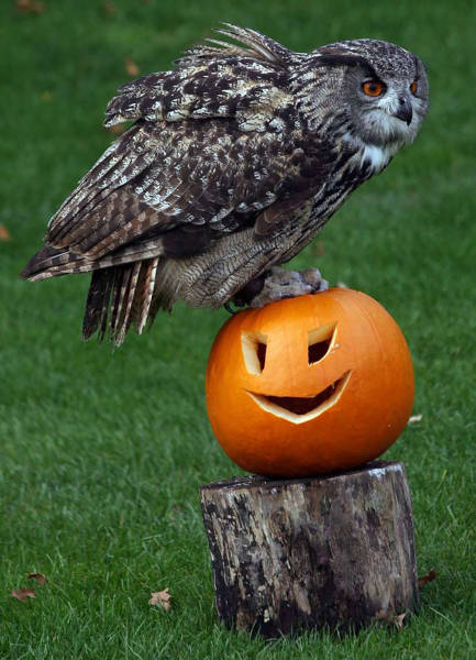 Have A Wickedly Wonderful Halloween, Folks!