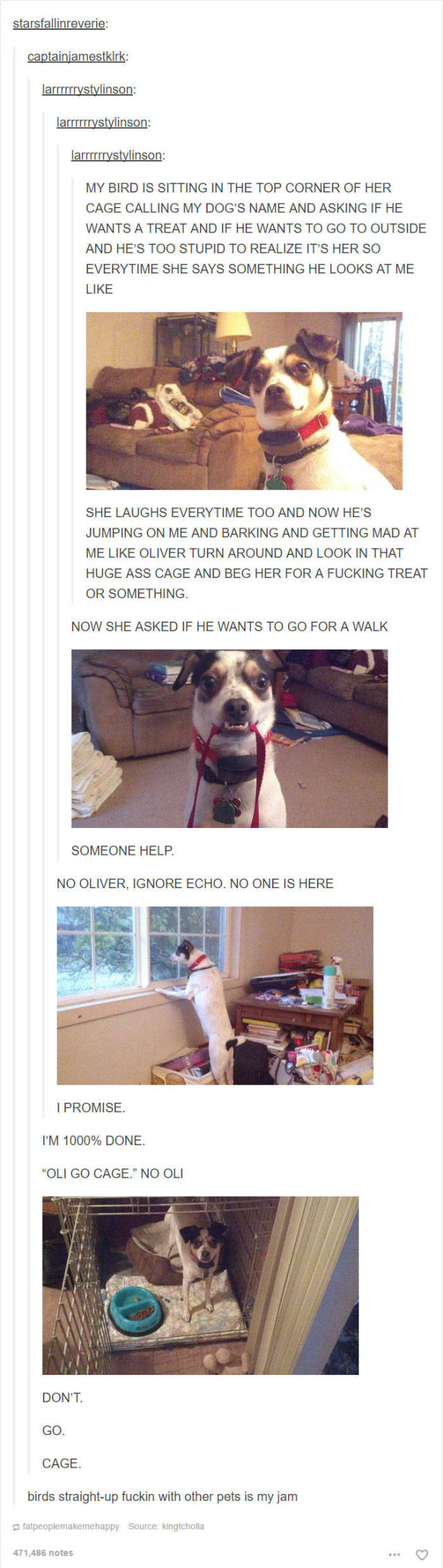 These Hilarious Dog Posts On Tumblr Won't Live You Indifferent