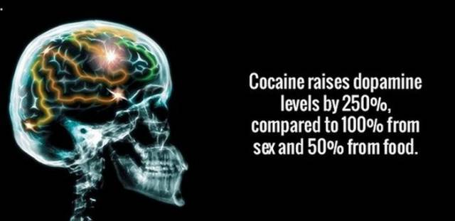 These Titillating Facts Will Lighten Your Work Day