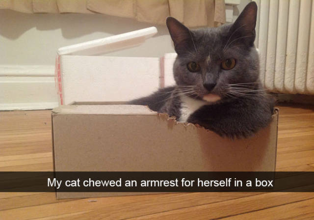 These Funny Cat Snapchats Will Definitely Boost Your Mood