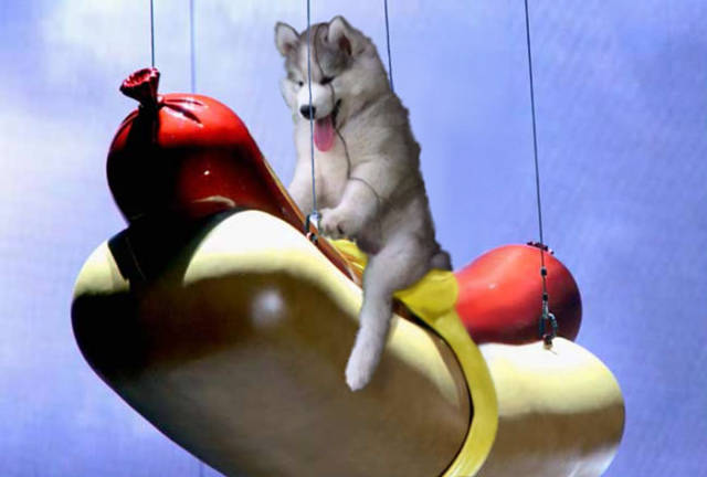 A Husky Pup Who Got Stuck On A Coconut Tree Triggered An Epic Photoshop Battle