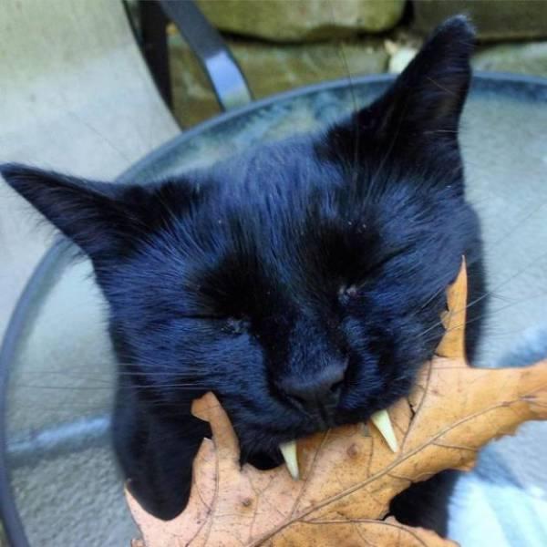 Black Rescue Cat Looks Like A Little Vampire